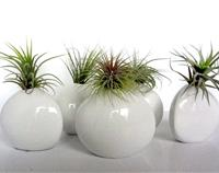 Pinch Pot & Air Plants, 2 varieties
